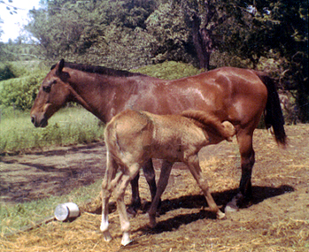 Photo Mare & Her Foal